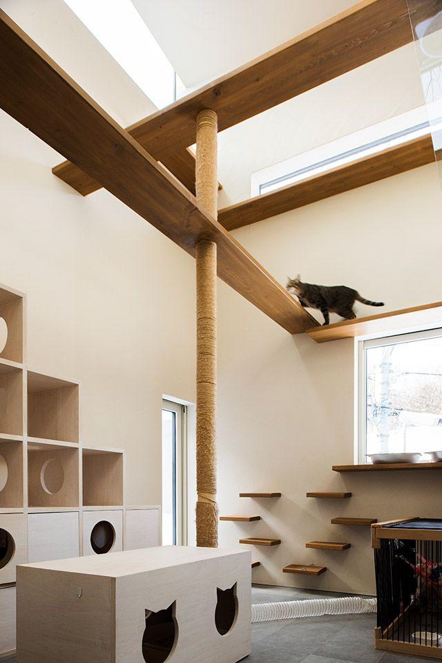 ニャンニョロノイエ 猫心をくすぐるキャットウォークや階段式の遊び場兼寝床 床暖房まで完備 猫の部屋 ペットルーム キャットスペース キャットウォーク 爪とぎ柱 造作 ペットと暮らす 猫 Cat フェレット 自宅で 住宅設計プラン ペットの部屋