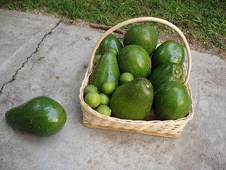 Vegetale 101% : RISO AL LIME, AVOCADO E CORIANDOLO