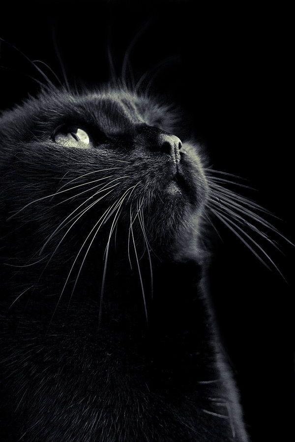 Cat - lovely photo