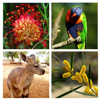 Typical Australian Flora and Fauna