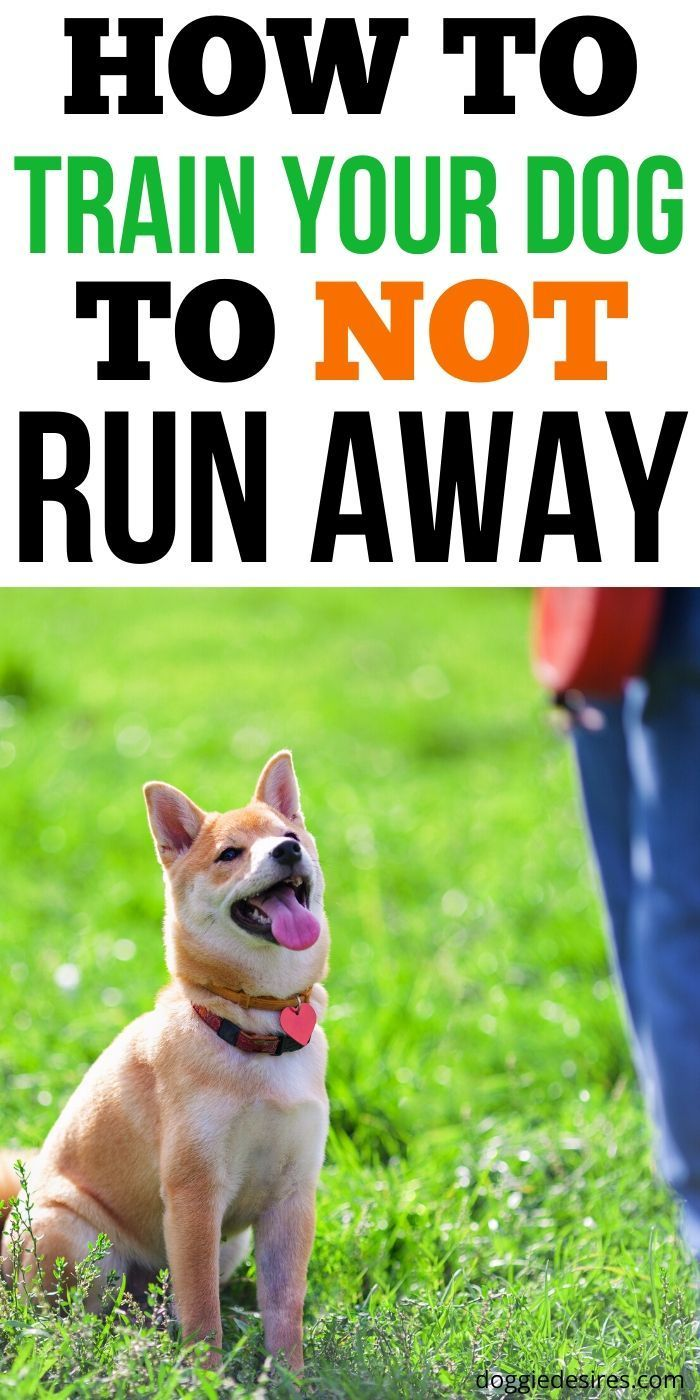 How To Train Your Dog To Not Run Away Training Your Dog Puppy Training Dog Training