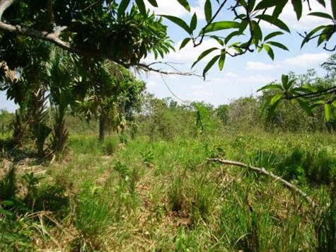 Lakefront Lot for sale in Corozal Bay, Belize | KGI Realtor
