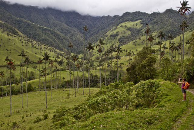 Parque Nacional Natural Los Nevados, Murillo, Colombia - World's tallest palms in Colombia's Coffee Triangle