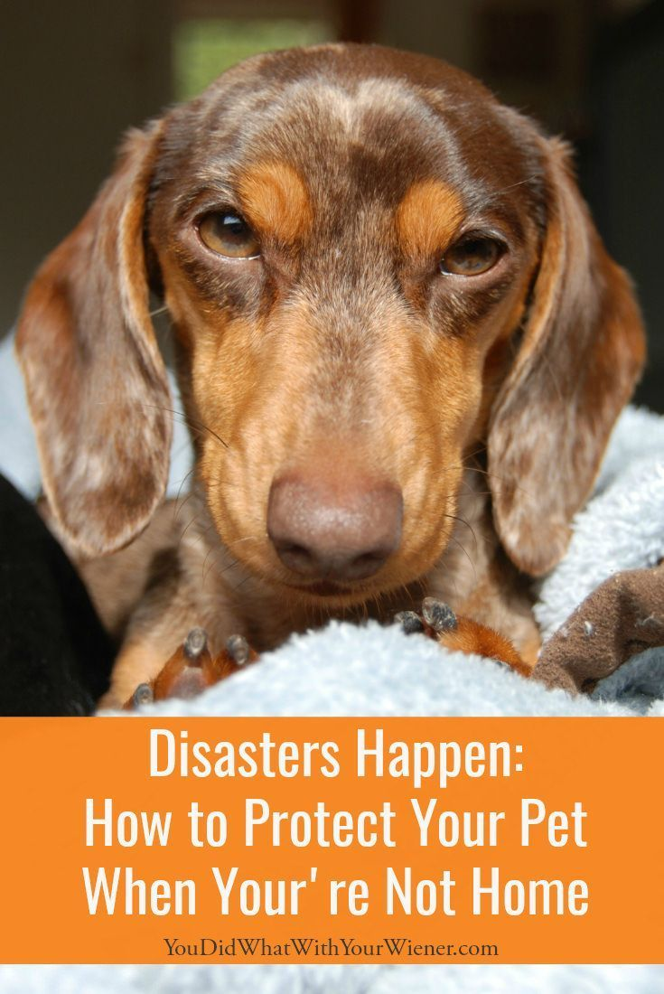 Disaster Happens How To Protect Your Pet When You Re Not Home Pet Insurance Reviews Cheap Pet Insurance Pet Insurance Cost