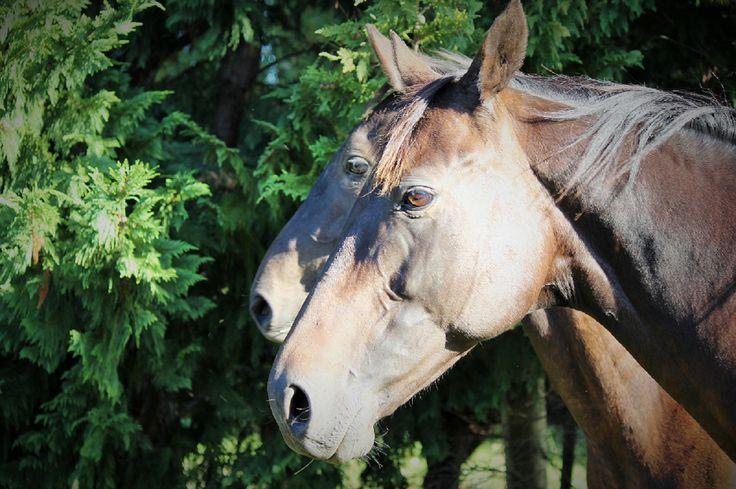 Equine Trader Vetpro Photo of the Week entrant - Lisa Eastlake