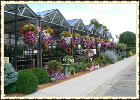 Red Wing's Leading Garden Center Sargent's Nursery is a remarkable Garden Center that also provides Landscape Design and Install services. Being part of the Red Wing community for 85 years is an honor and it shows. Sargent's serves customers with a smile, while providing expert horticulture advice, high quality plant materials and comfortable shopping environment. Stop in to shop from Red Wing's largest selection of beautiful plants and garden decor. Learn More >