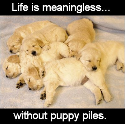 101 best Puppy Love? | images on Pinterest | Animals, Puppies and Dogs