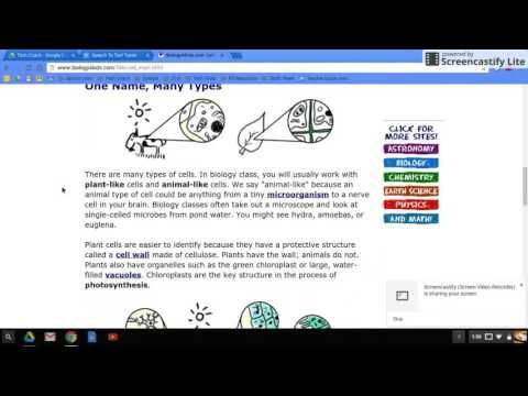Using Speech to Text / Text to Speech In Google Docs and on a Chromebook - YouTube