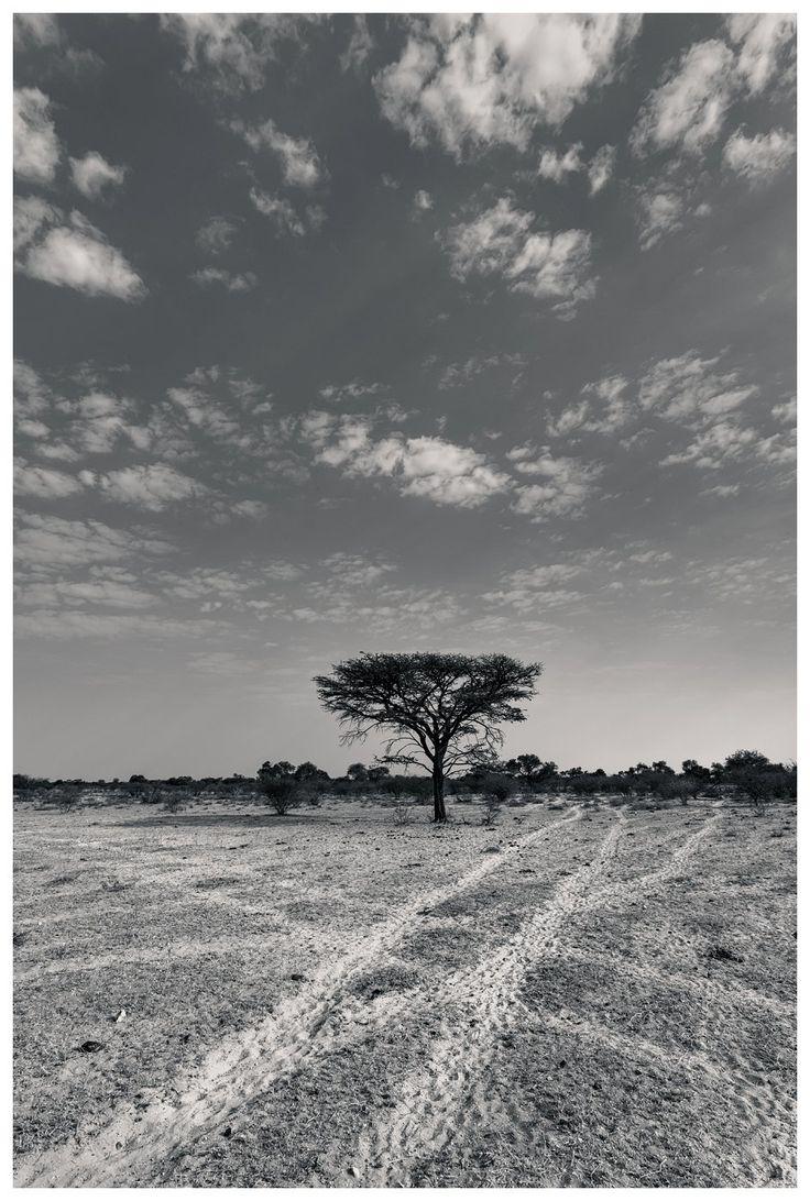 05 Kalahari | Black and White Study | Danie Bester http://buff.ly/1VEvENw