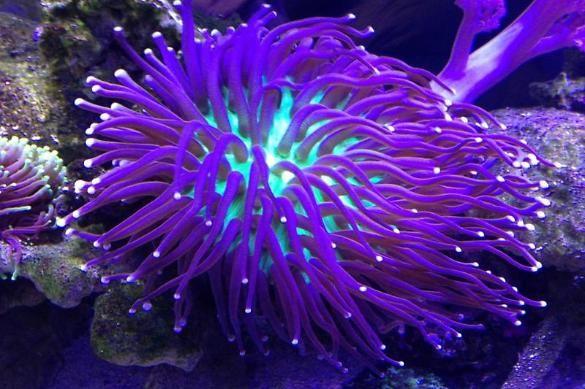 aquarium saltwater aquarium fish tanks freshwater aquarium fish ...
