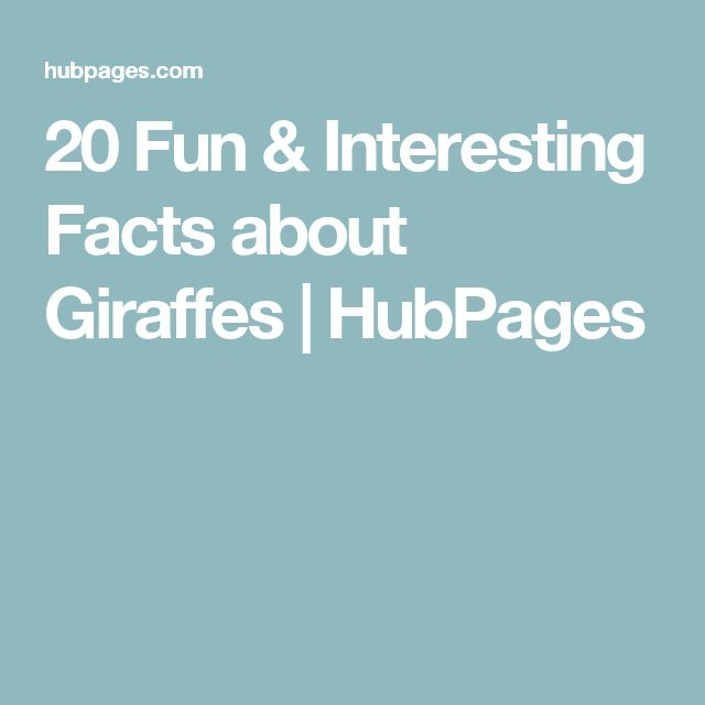 20 Fun & Interesting Facts about Giraffes   HubPages
