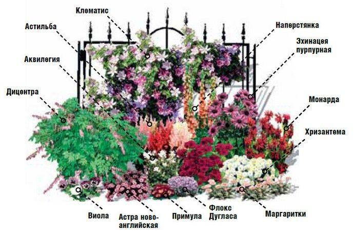 Миксбордер между дорожкой и садовыми кустарниками можно организовать согласно схеме