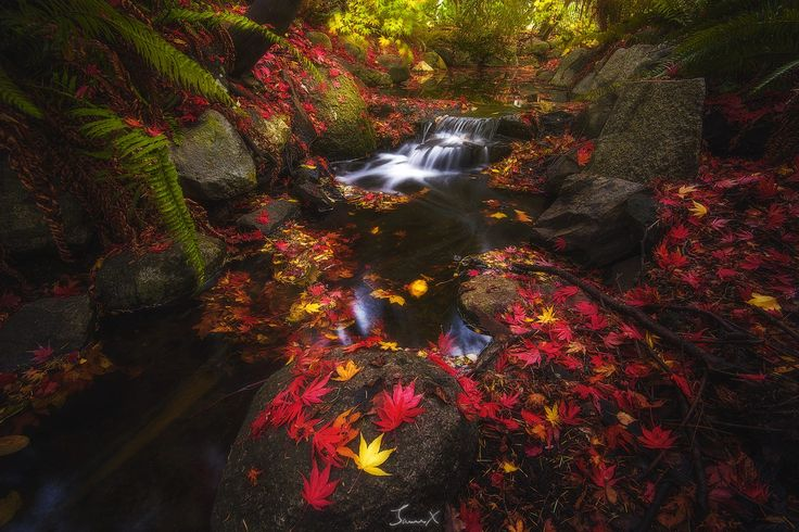 Here is another hidden gem I found in Victoria BC, Canada. It's a little creek that's located in the most popular park in town, the Beacon Hill Park. It's hidden to most visitors since it's covered by dense vegetation. I found this spot in years ago, but I wasn't able to shoot it until recently. Hope you like it.