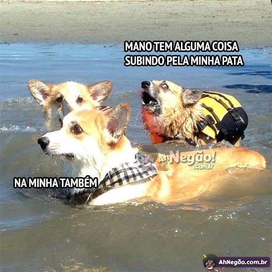Pânico no lago dos cachorros