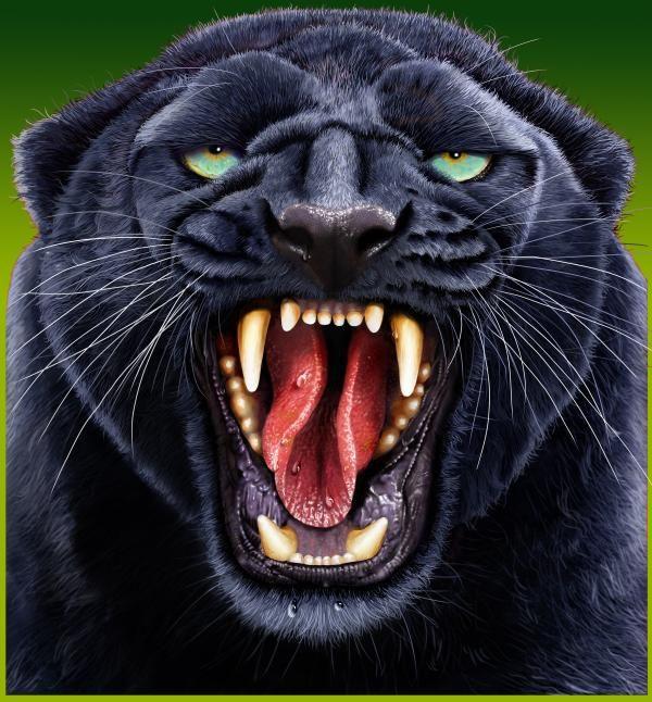 Black Jaguar Growl: Decoupage, Animales And Fine Art Print