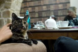 Paris Says Bonjour to Its First Cat Cafe