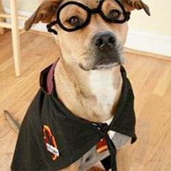 hahaha: Potter Dogs, Costumes Diy, Dogs Costumes, Halloween Crafts, Dog Costumes, Potter Pooch, Pet Costumes, Harry Potter Costumes, Diy Pet