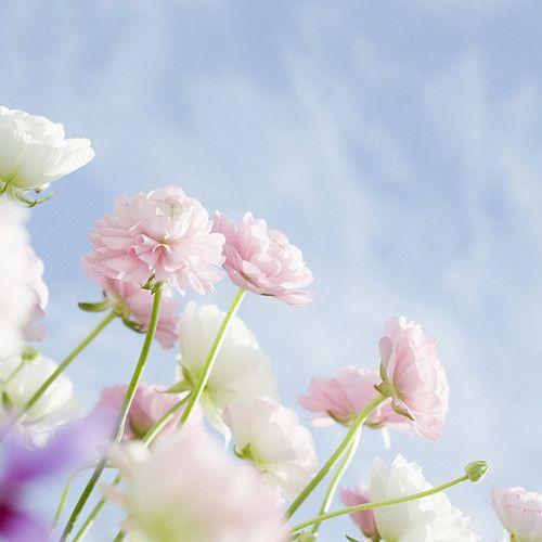 Elegant-flowers-ipad-background