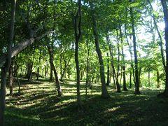 ナショナル・トラストの森林風景