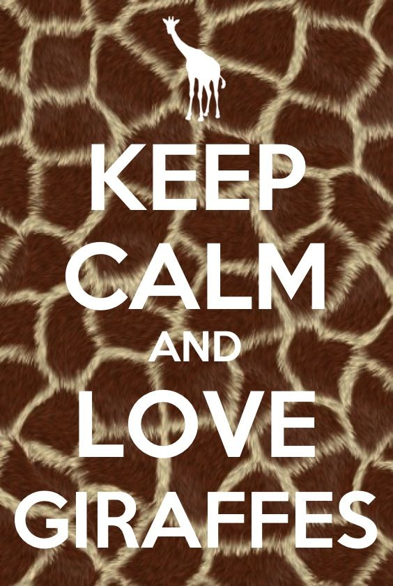 Keep calm and love giraffes