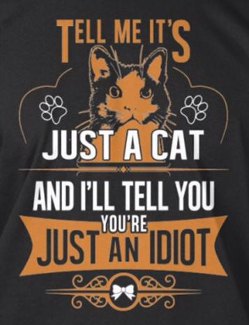 "LOL, no such thing as ""just a cat""!!"