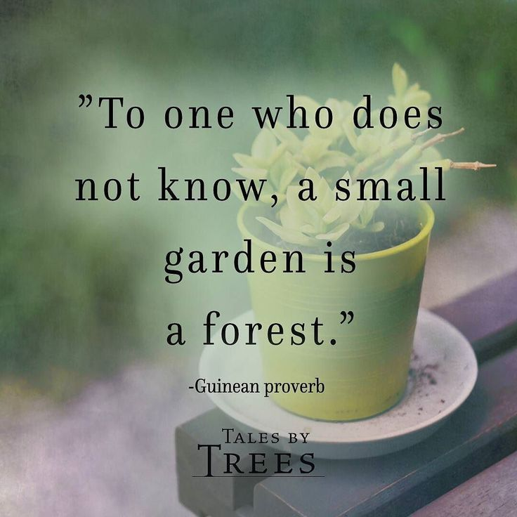 #quote #nature #talesbytrees