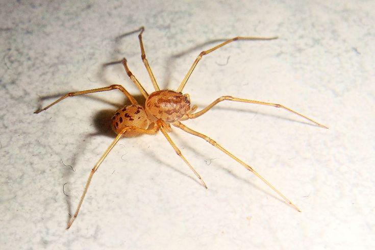 A Spider - by Gianni Del Bufalo CC BY-NC-SA by gianni del bufalo A Spider - by Gianni Del Bufalo CC BY-NC-SA Ragno - DSC06906 - #spider #ragno #macro #العنكبوت #一只蜘蛛 #araneo #isang spider #une araignée #クモ #seekor laba-laba #een spin #uma aranha #ਇੱਕ ਮੱਕੜੀ #паук #una araña #แมงมุม #eine spinne #örümcek #павук #אַ שפּין Marche, Italy
