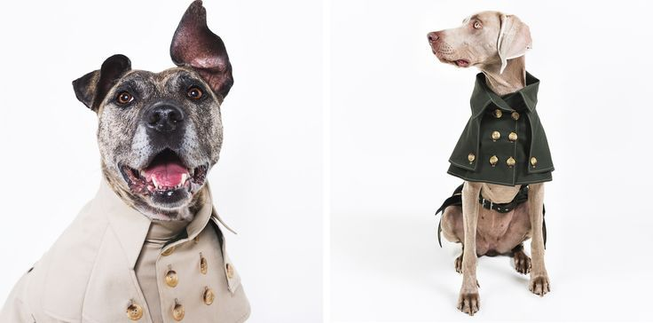 Custom-tailored dog jackets, coats, sweaters, and more handmade in Berlin, Germany by happystaffy.me. – Canonbury Interiors