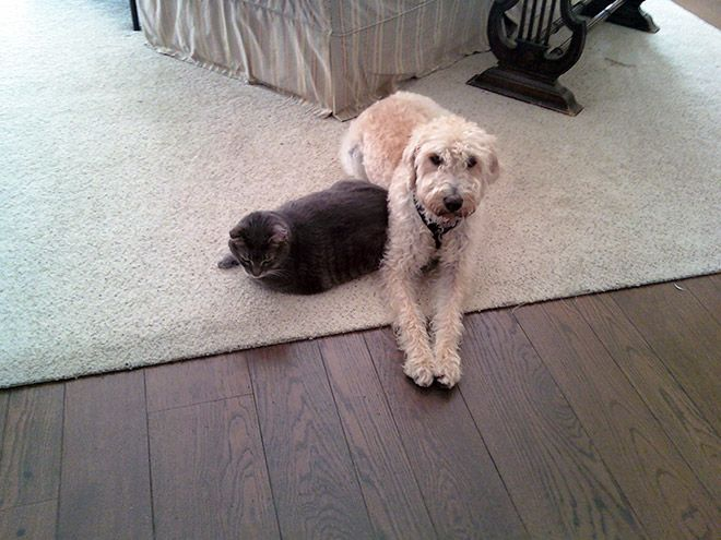 Dogs Sleep On Cats – 22 Pics