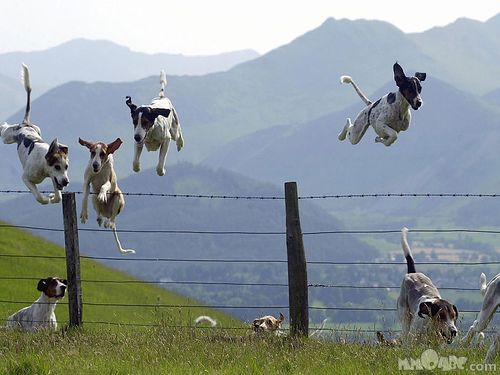 they fly through the air with the greatest of ease.....