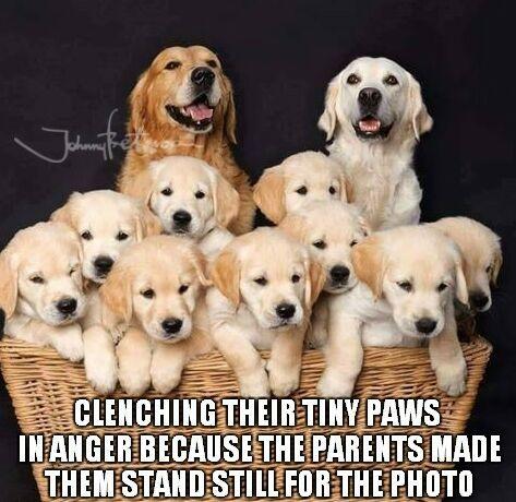 https://es.johnnybet.com/loteria-nacional-ecuador-codigo-promocional#picture?id=7030 #dogs #puppies #familyphoto #cute #funnyanimals