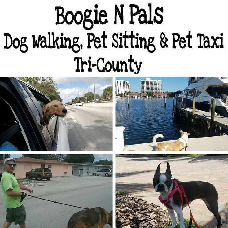 10% off  when mentioning this ad!! Boogie N Pals Dog Walking Pet Sitting and Pet Taxi Tri-County Area  When your #pet needs a little #TLC its time to #Boogie! #DogWalking #PetSitting & #PetTaxi  When youre busy at work or play whos watching mans best friend?  Discover the premier dog sitting and walking services and let us help keep your pup fit and happy!  Peace of Mind When You're Away! #BoogieNPals offers an invaluable service dedicated to those working long hours time constraints anyone…