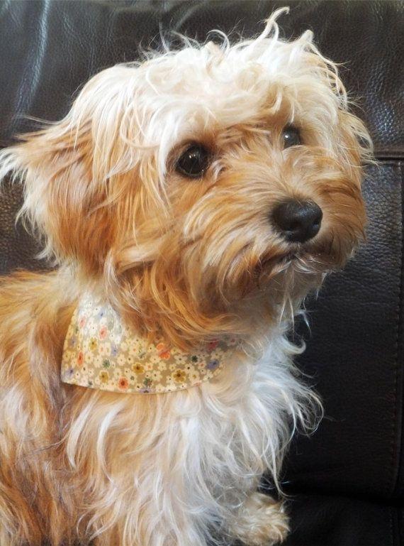 Bandana dog scarf funky designer dog by PerfectlyPoshPaws on Etsy