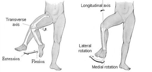 Movements of the Knee Joint