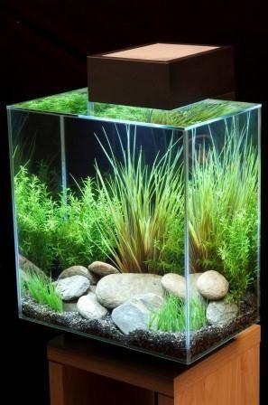 Pin By Home And Garden Design Ideas On Aquarium Interior Pinterest Fish Tank Nano