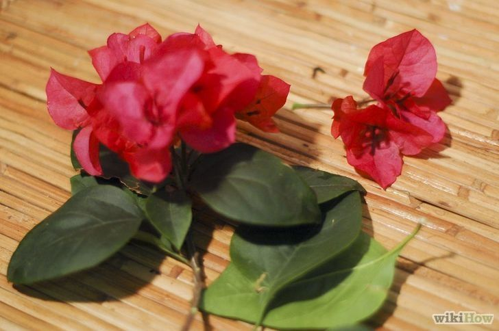 Imagen titulada Preserve Cut Flowers With Wax Step 4