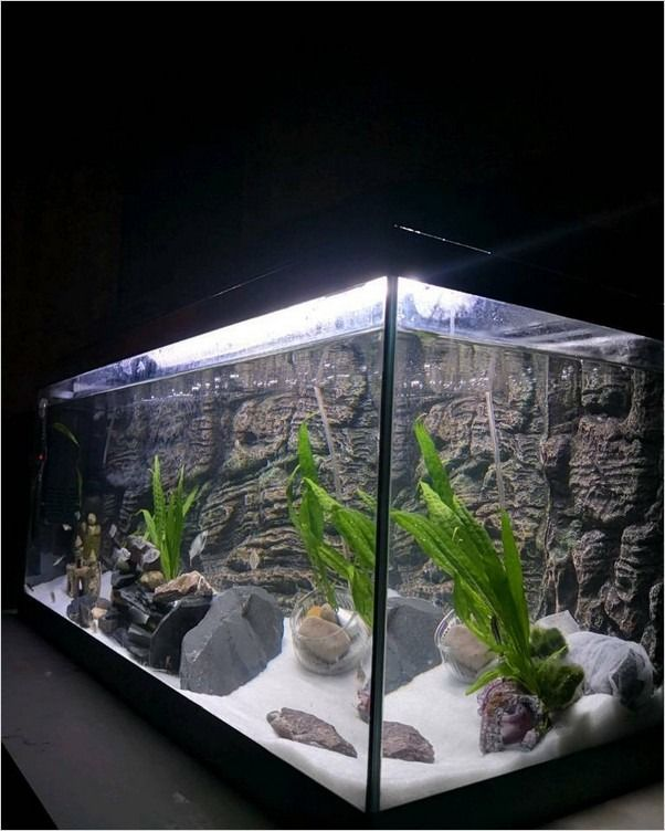 20 Gallon Long Fish Tank In 2020 Fish Tank Fish Tank Plants Betta Fish Tank