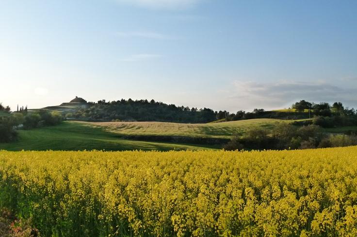 paisaje en Calonge de Segarra 28/04/2013 / www.calros.info