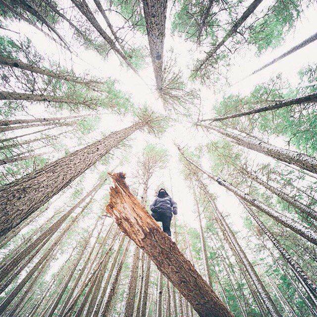 Нет ничего лучшего, чем провести немного времени в лесу, дать своей голове отдохнуть перед учебой и возвращением домой, в город, к шуму. [www.lime-on.com.ua]  #limeonline #limeoncomua #forrest #буковель #лес #дерево