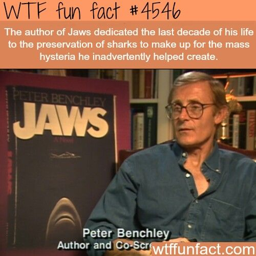 thats what all the writers of anti shark films should do