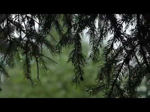 Sound of rain in the forest | Sounds of nature for relaxation | 1