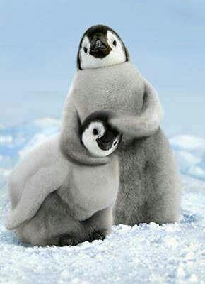 Penguin noogie time