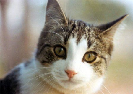Google Image Result for http://i2.kym-cdn.com/entries/icons/original/000/007/263/photo_cat2.jpg