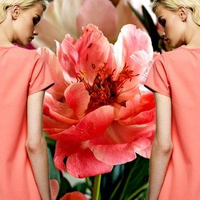 Sukienka w kolorze piwonii