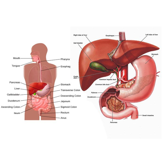 Liver cancer specialists in maryland