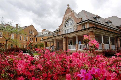 Azaleas in bloom in front of Cudd Hall, Tulane Univ.