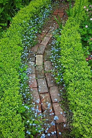 Beautifully edged path...forget me not! Love this                                                                                                                                                                                 More