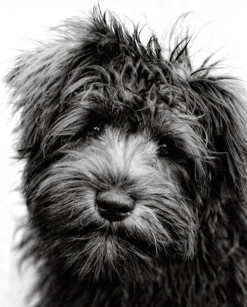 Canmalkocoglu tipli: Doggie, Animals, Sweet, Dogs, Pet, Pup, Friend