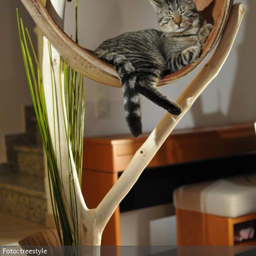 34 besten haustiere bilder auf pinterest haustiere. Black Bedroom Furniture Sets. Home Design Ideas