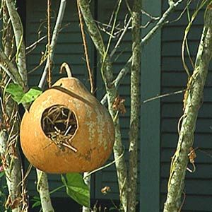 Gourd Bird Houses. I have 5 of these in my trees & I get guests every year in them!